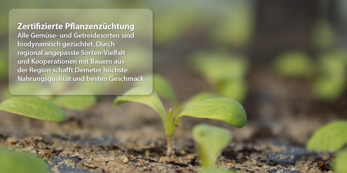 Demeter - Zertifizierte Pflanzenzüchtung